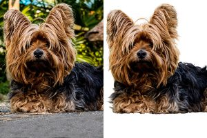outsource image masking services sample
