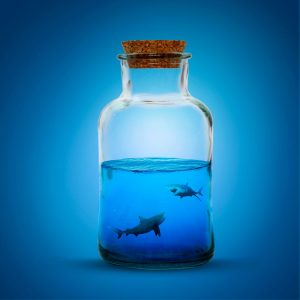 sea shark photo manipulation working sample